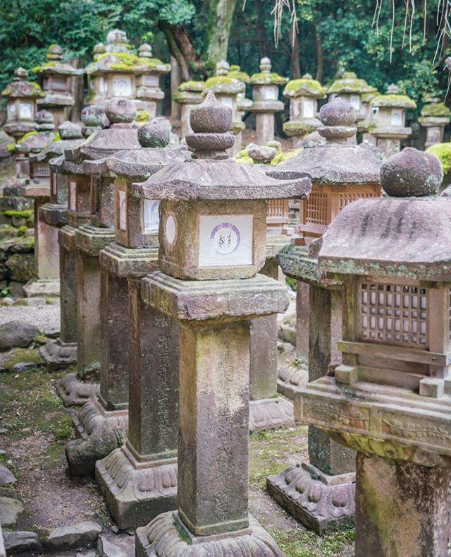 An army of lanterns.  🗾🗼⛩️🇯🇵👘🏯🍜🍱🎎🌸 #snubstravels ➡️ Like travel vids? YouTube.com/ShannonMorse 📸 Sony A7RII 🌎 Location tagged above photo!  . #temple #shrine #japan #japantravel #traveljapan #SnubsInJapan #japantrip #discoverjapan #myjapan #instagramjapan #japanawaits #japanloverme #japanalert #japan_vacations  #japan_night_view #visitjapanjp #visitjapanau #GirlsWhoTravel   #bestintravel #howitravel #travel #traveling #travelgram #travelvlogger #travelguide  @exploringjapan @visitjapanau  @japanalert @japanawaits @japan.vacations @japantravelcom @japanloverme @visitjapanjp @visitjapan.us   #nara #narajapan #narapark #naradeer