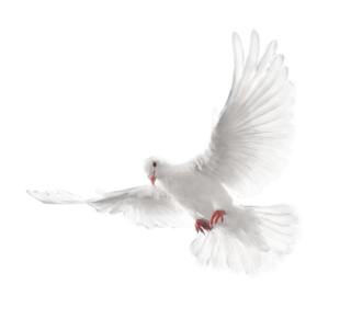 15-white-flying-pigeon-png-image.png