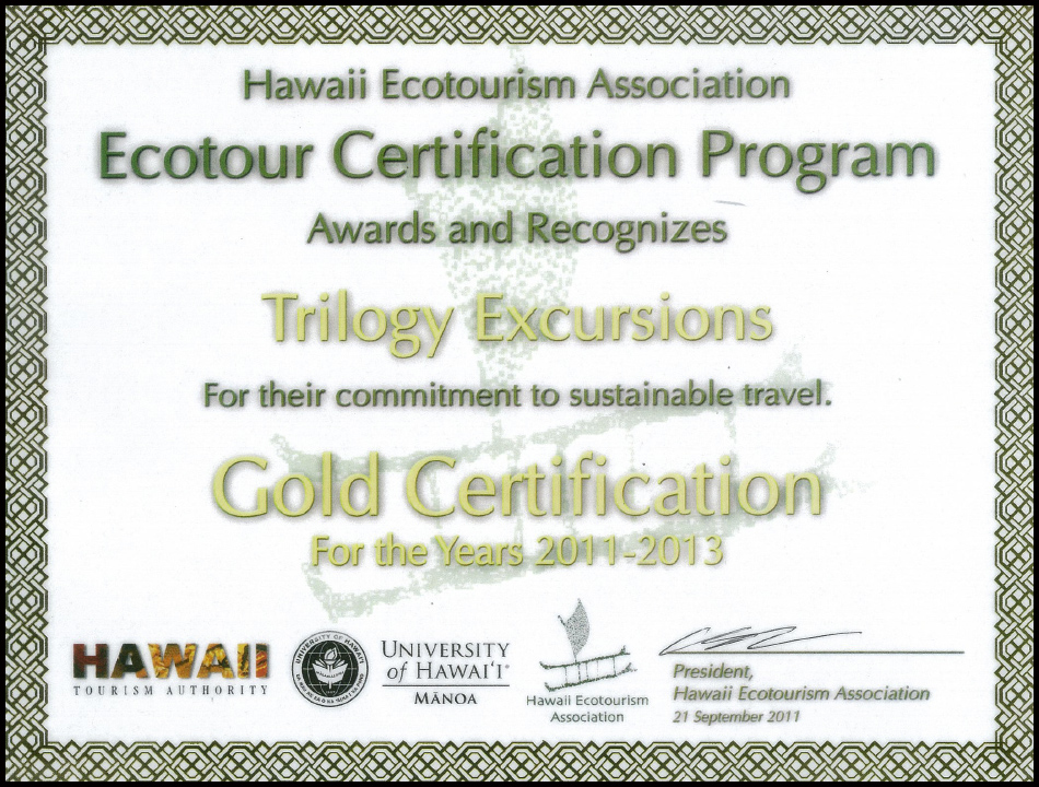 Eco Gold Star with border