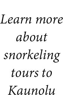 snorkeling tours text