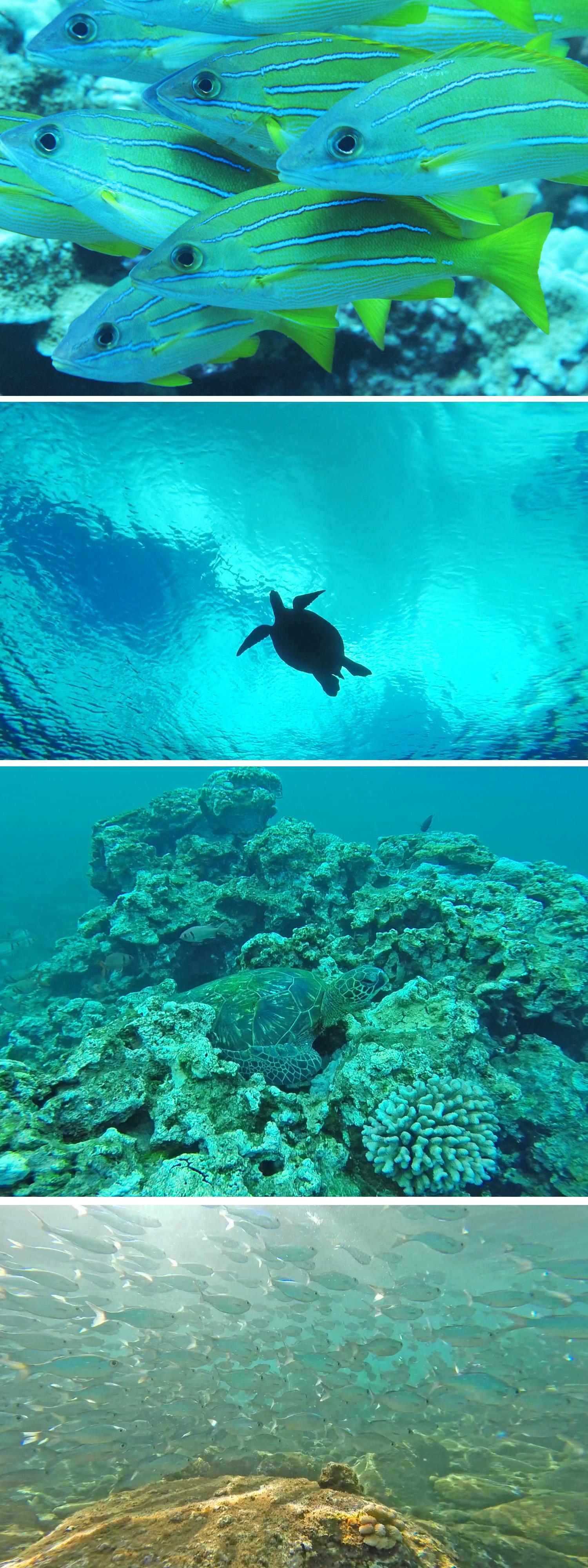 Snorkeling at Honolua Bay Maui