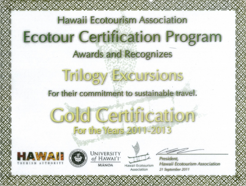Eco Gold Star