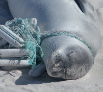 entangled_seal_202X180px
