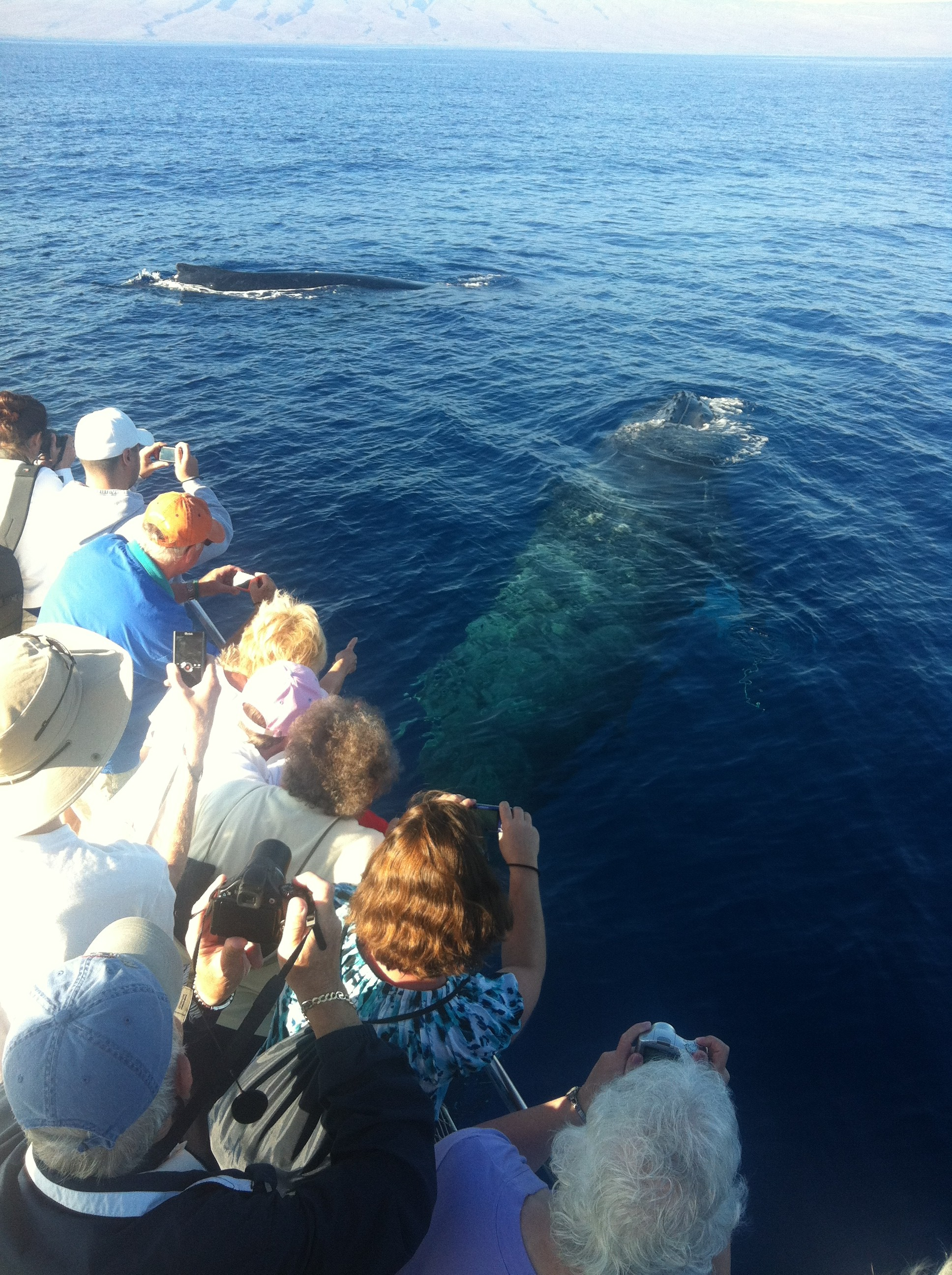 T4 whales.2