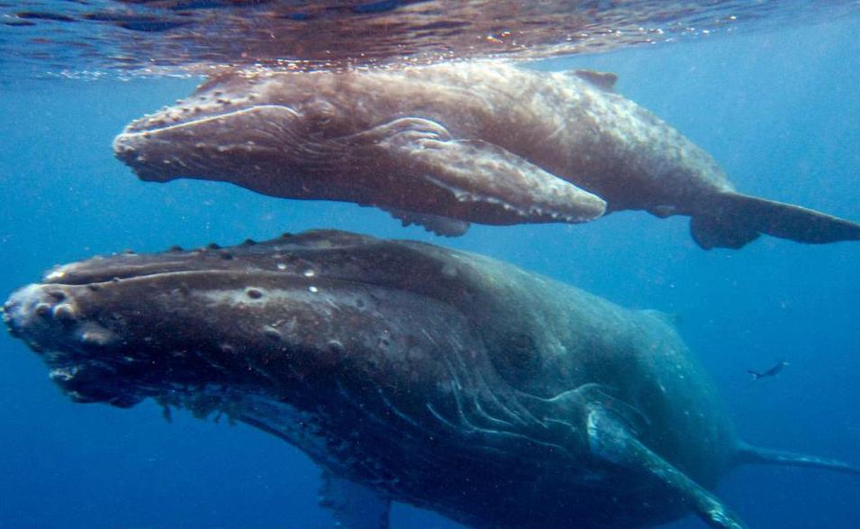 mombabywhale