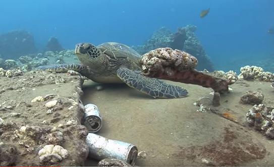Blue Aina Turtle