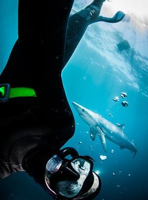 Ralph Pace - Underwater & Environmental Photographer