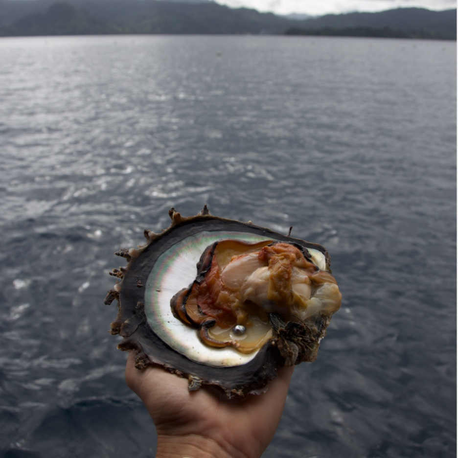 Oysters are the ocean's natural filter, making pearls a limited resource.