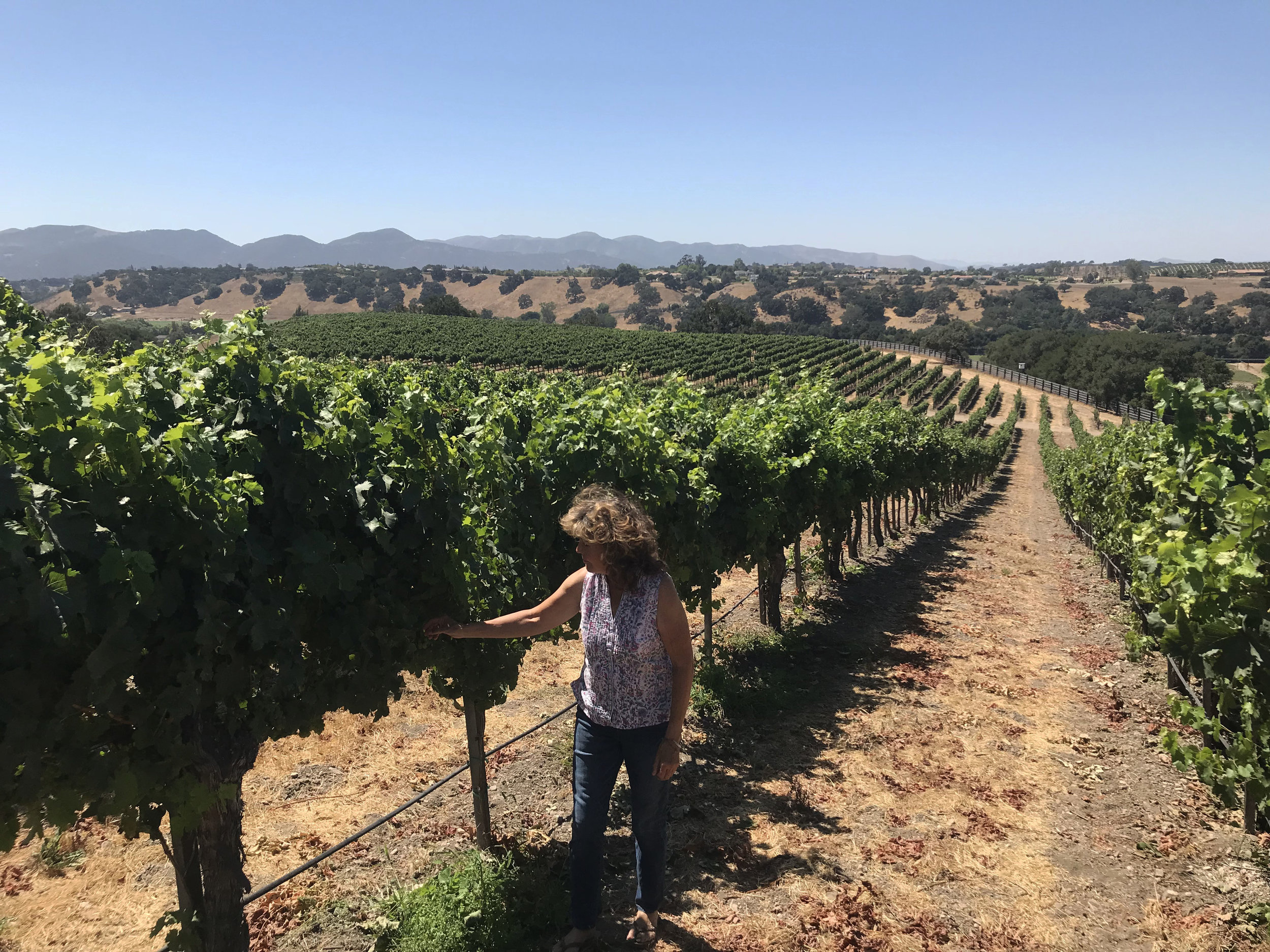 Karen Steinwachs checks grapes to see if they are ready to harvest at the Buttonwood Vineyard in the Santa Ynez Valley, CA. Photo credit: Adriana Cargill