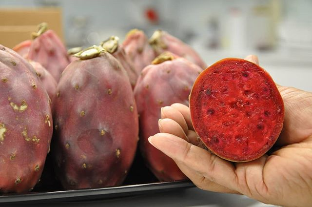We hand harvest and inspect all of our ingredients to ensure they are picked at their peak nutrition and left unharmed and intact during harvest. Nochtli SuperiorFruit Concentrate is manufactured in an ultra-modern, high tech, U.S. facility specializing in nutritious consumer products (we ensure the best way to preserve the nutrition of prickly pears and nopal pads!). Learn more at Nochtli.net 😎  #SuperiorFruit #ParagonFruits #NochtliRuby #NochtliEmerald #Naturalproducts #Antioxidants