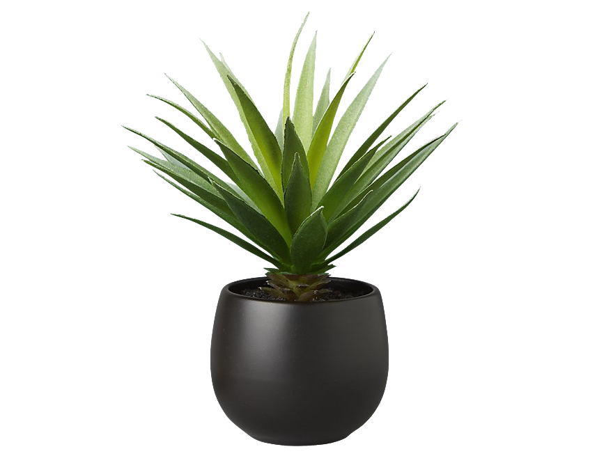 cb2 : potted succulent with black pot : $10