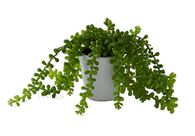 Faux potted trailing succulent : $29