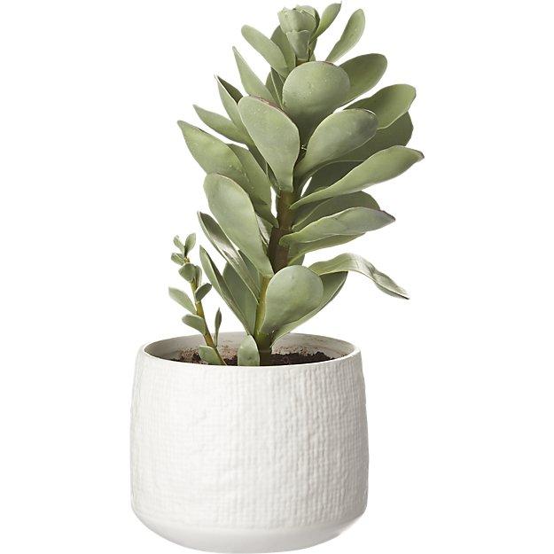 faux potted succulent -