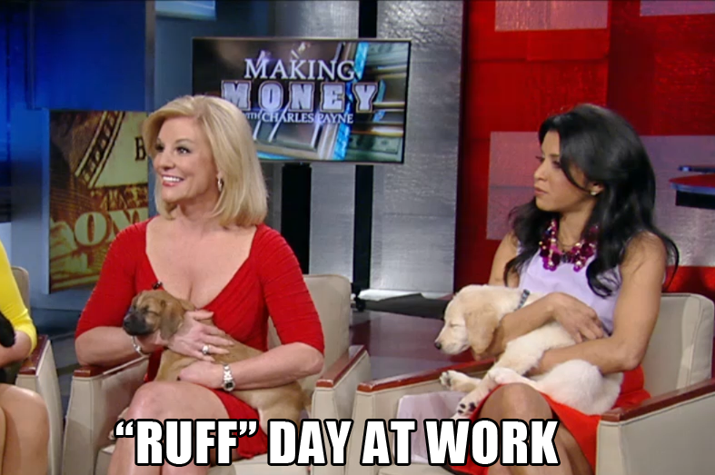"""Hitha Herzog holding an adorable puppy. Meme caption reads: """"Ruff"""" day at work."""