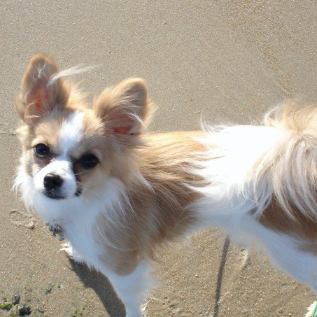 first trip to the beach. She wasn't a fan of the wind or the sand!