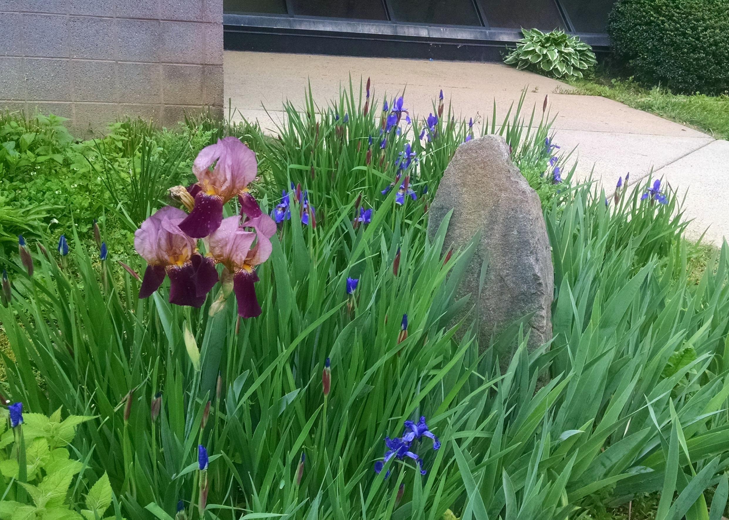 Pretty Purple flowers in the rain at the REC center