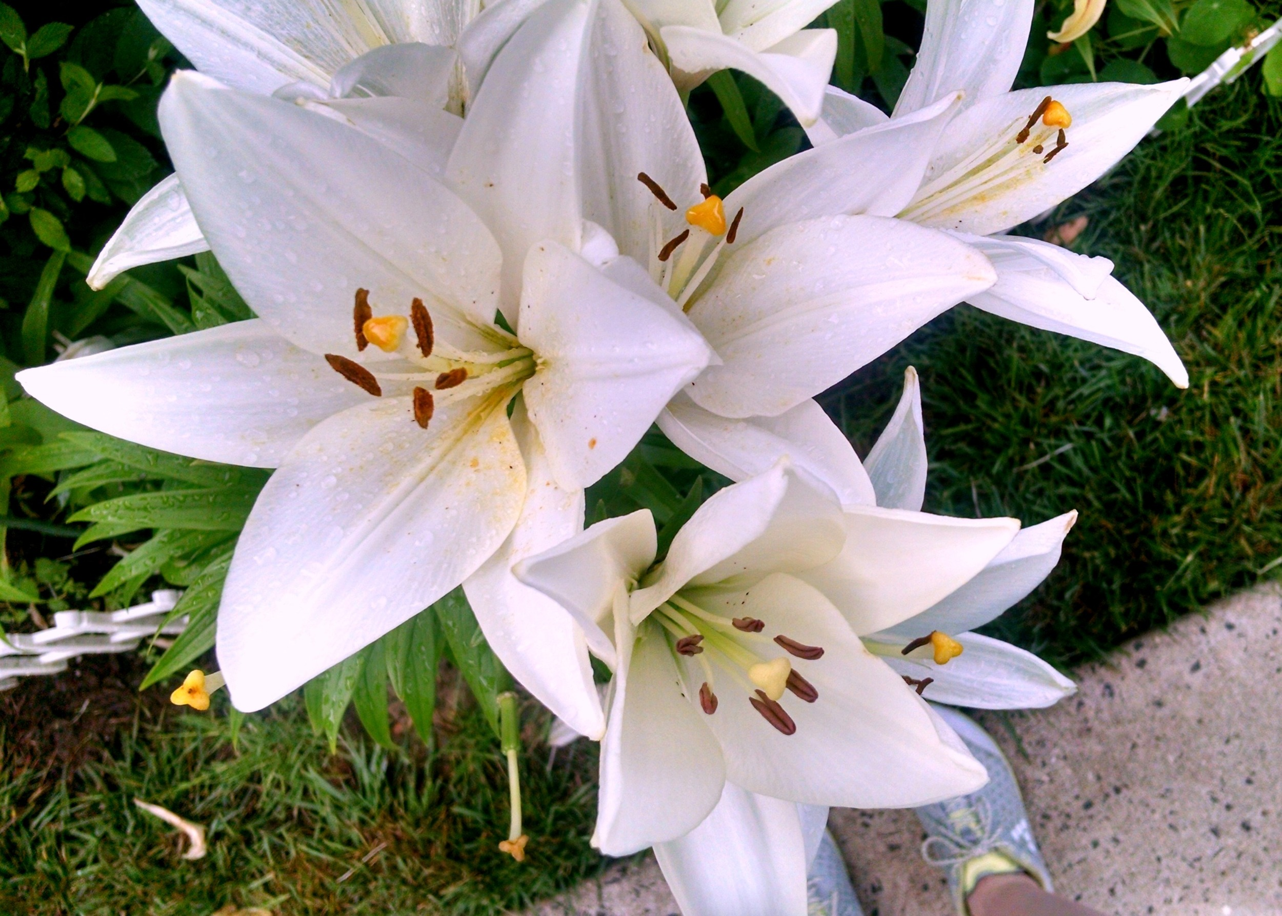 June lilies after a weekday run.