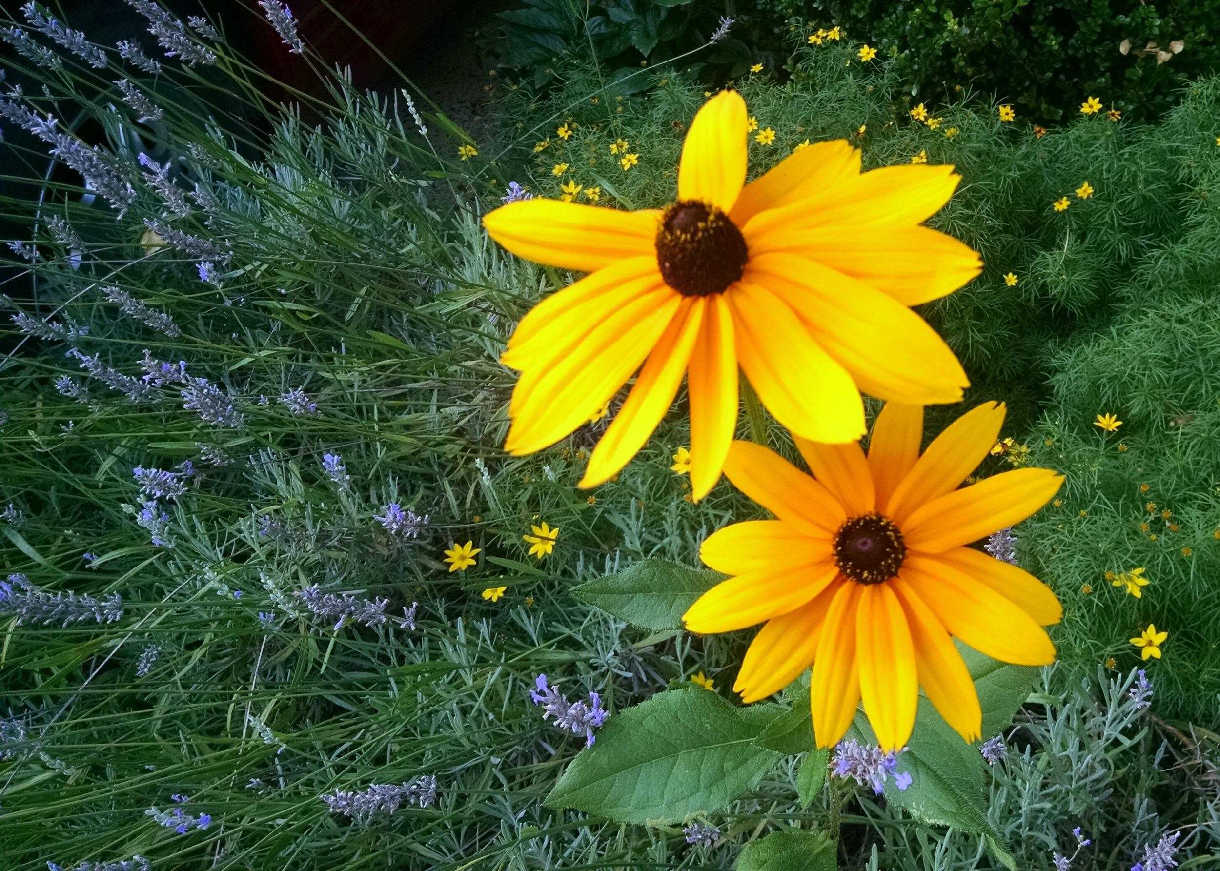 Best flower sighting of the week