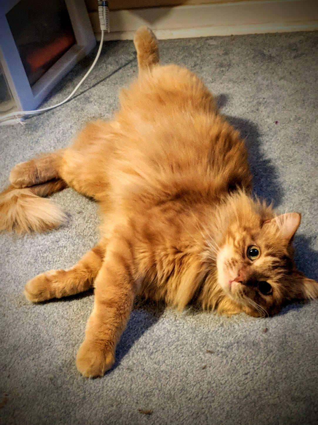 Pictured: Noam Chompsky, arguably the most adorable kitty. -