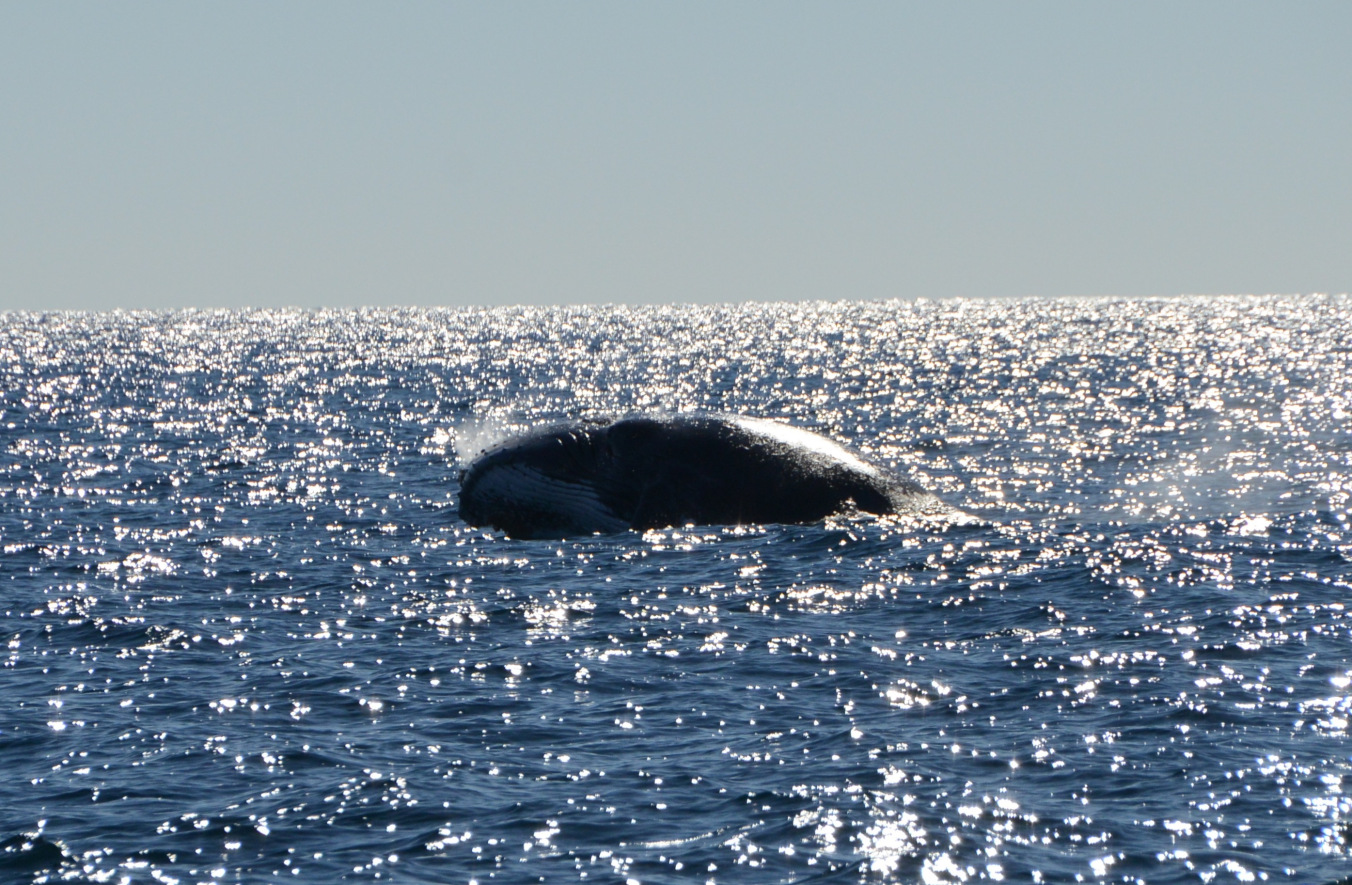 Whale Watching Gold Coast Queensland 13