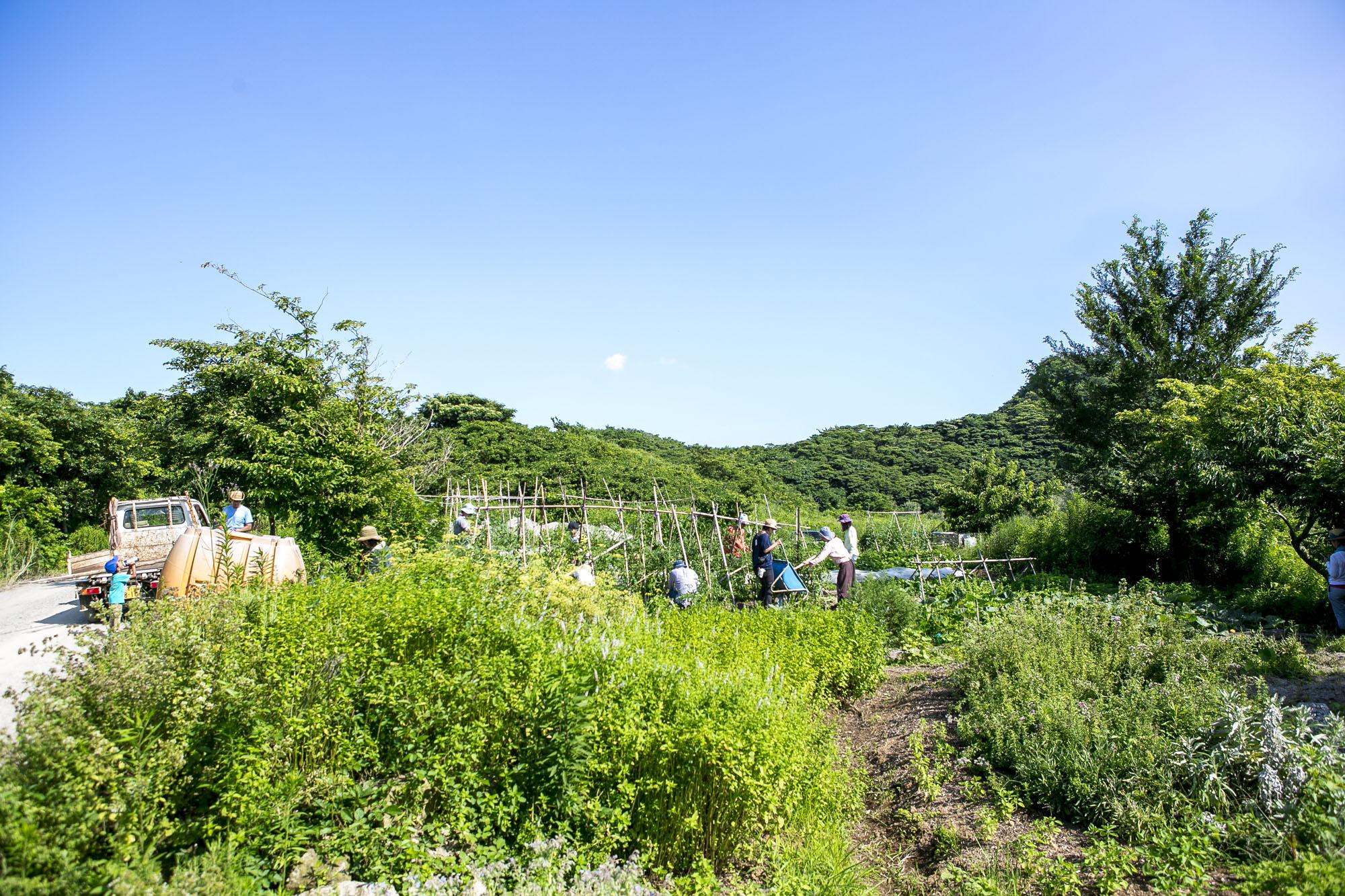 1.FIELD WORKフィールドワーク - ・スクール専用の畑を土作りから開始。農園のスタッフによる栽培のコーチング。・専用の畑作りのほか、農園の畑仕事や設備作りや堆肥作りなども行う。・当日以外にいつでも来て畑の世話が可能。・希望者で集まるワークデイも開催していきます。・横須賀〜葉山をまたぐ「森と畑の学校」と 衣笠にある「古民家のある畑」の2拠点で開催します。