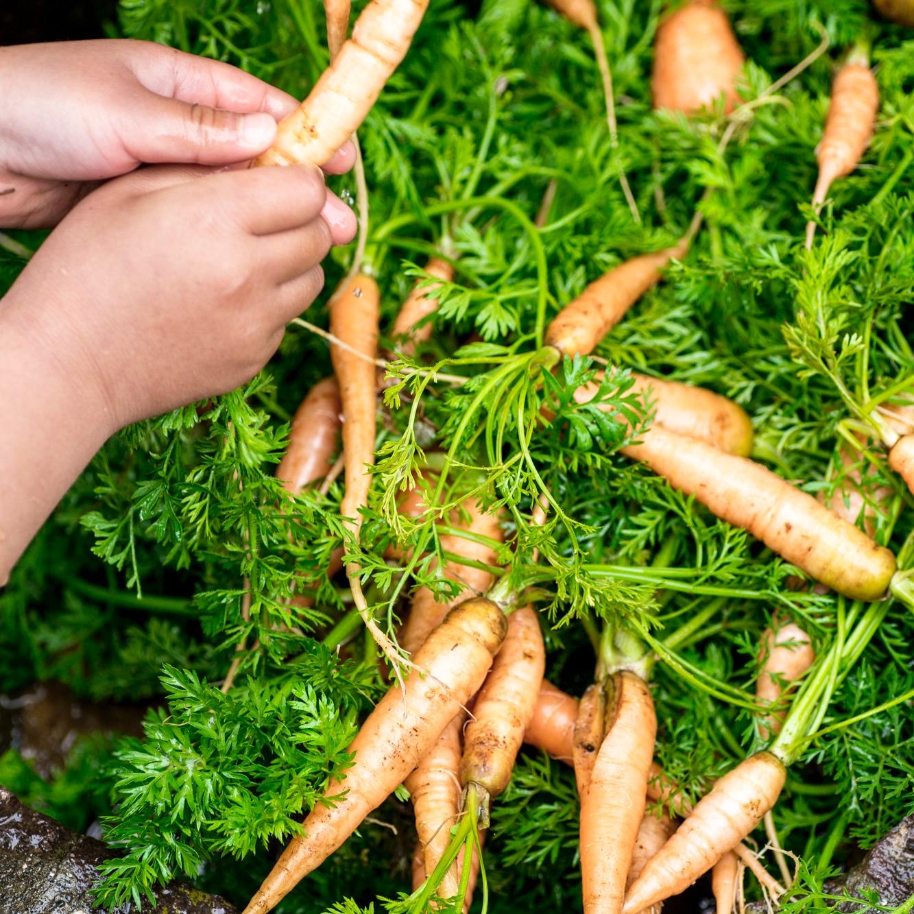 2.安全・安心な食材 - できる限り無農薬栽培・有機栽培の農作物を使用。もちろん化学調味料や保存料は一切不使用。