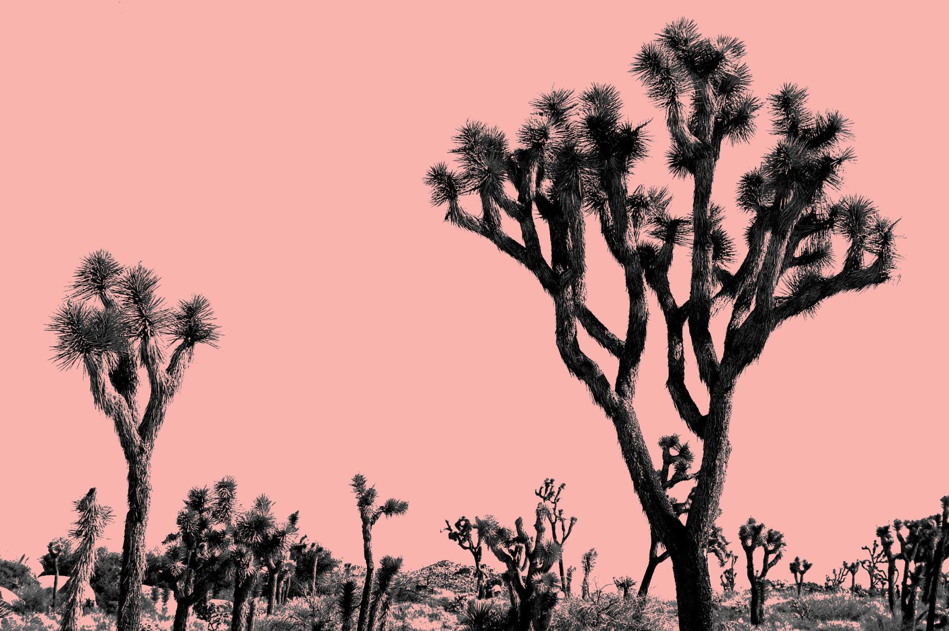joshua-pink.jpg