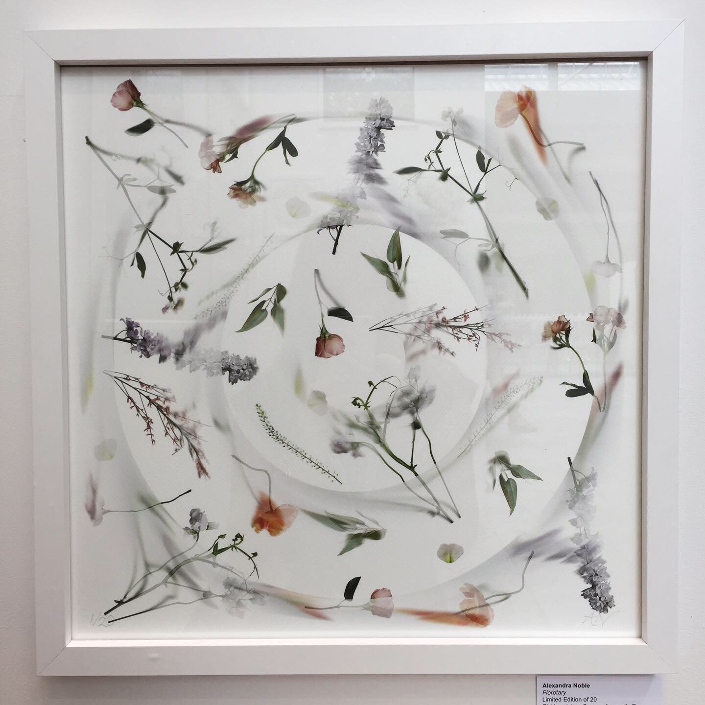 Florotary   Limited Edition of 20  Giclée print on Canson Aquarelle Rag  40 x 40 cm (unframed)   £200.00