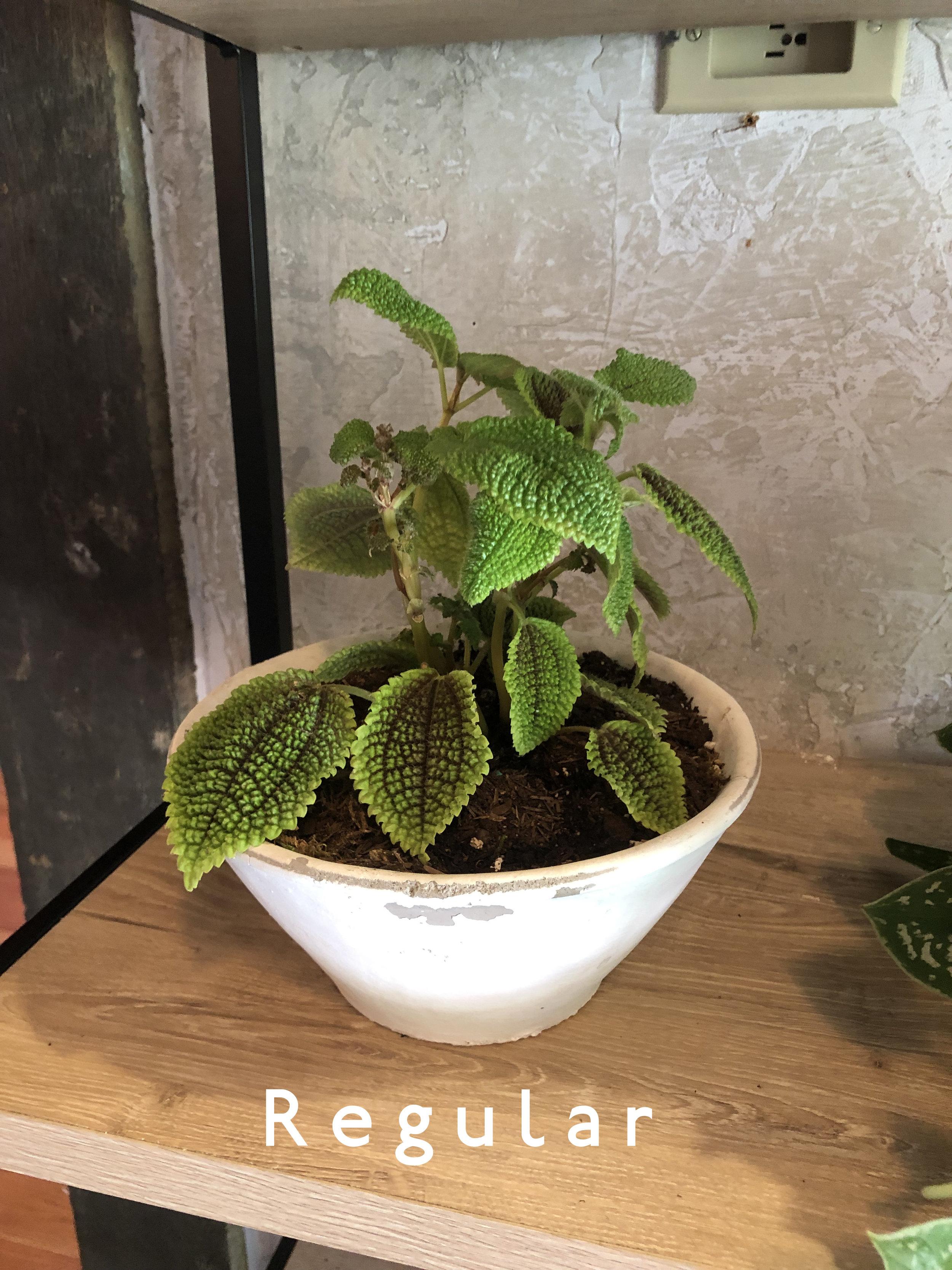 Plant Tribe.jpg