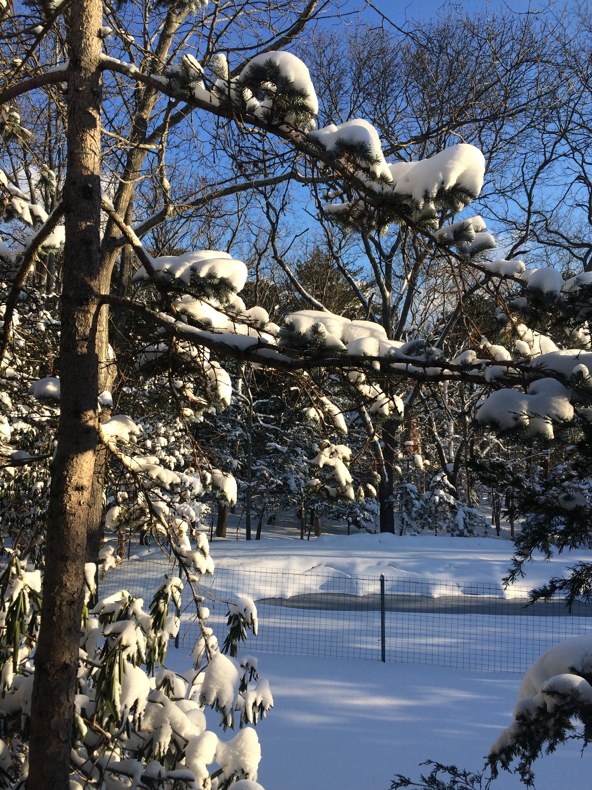 A winter wonderland when it snows.