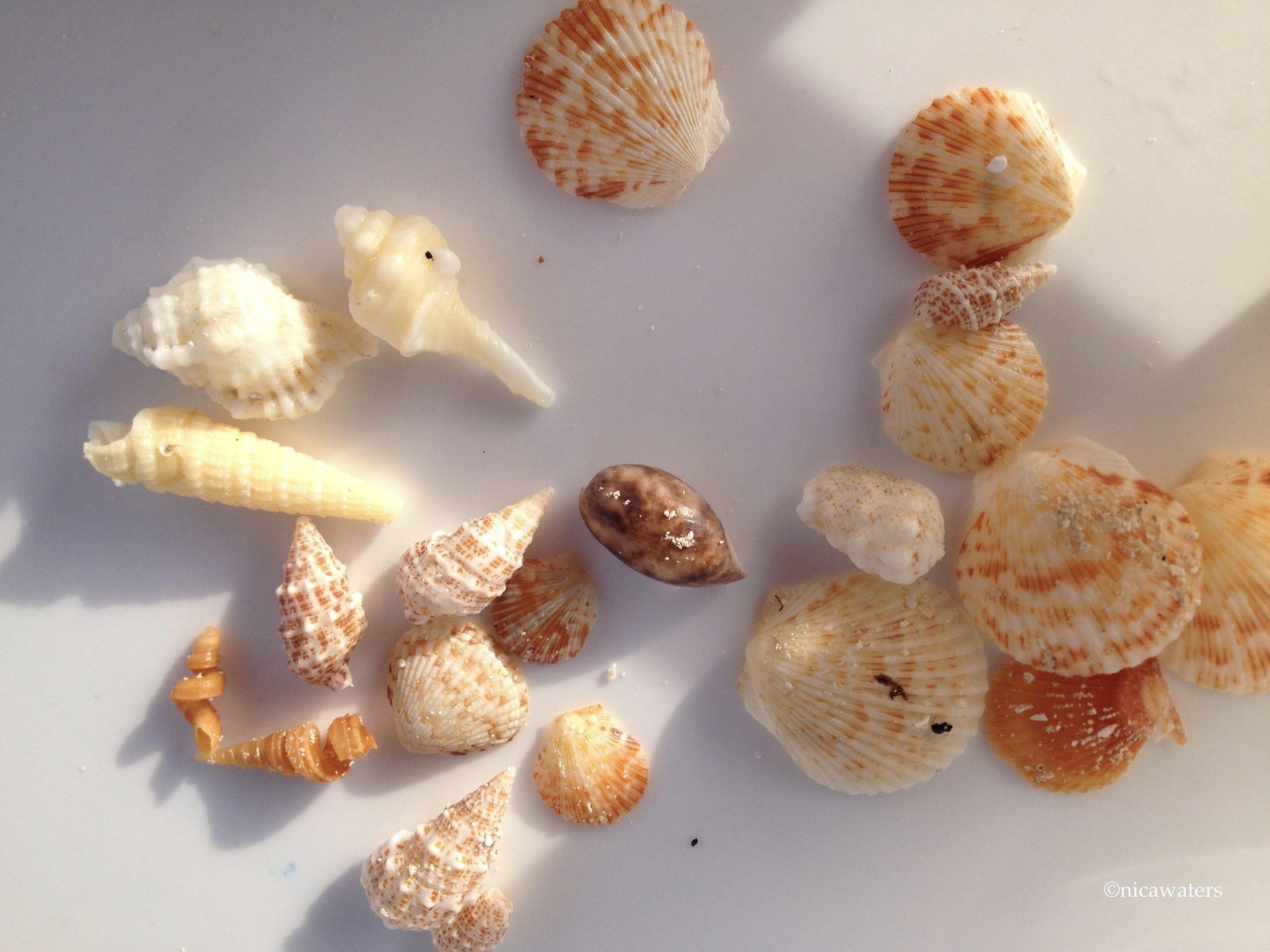 Some Bahamas shells