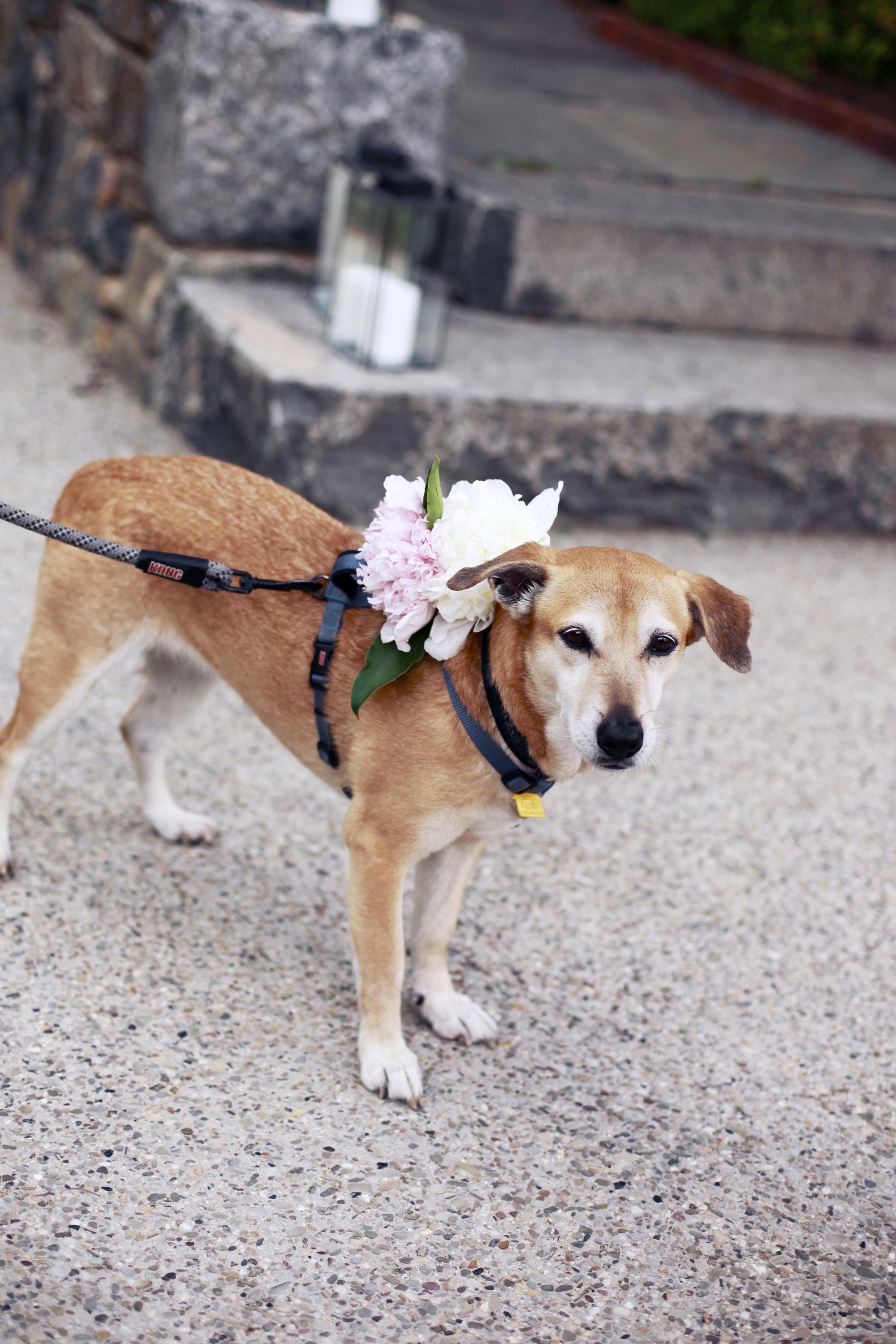 Shannon-Wellington-Delaware-Wedding-Rustic-Home-Wedding23.jpg
