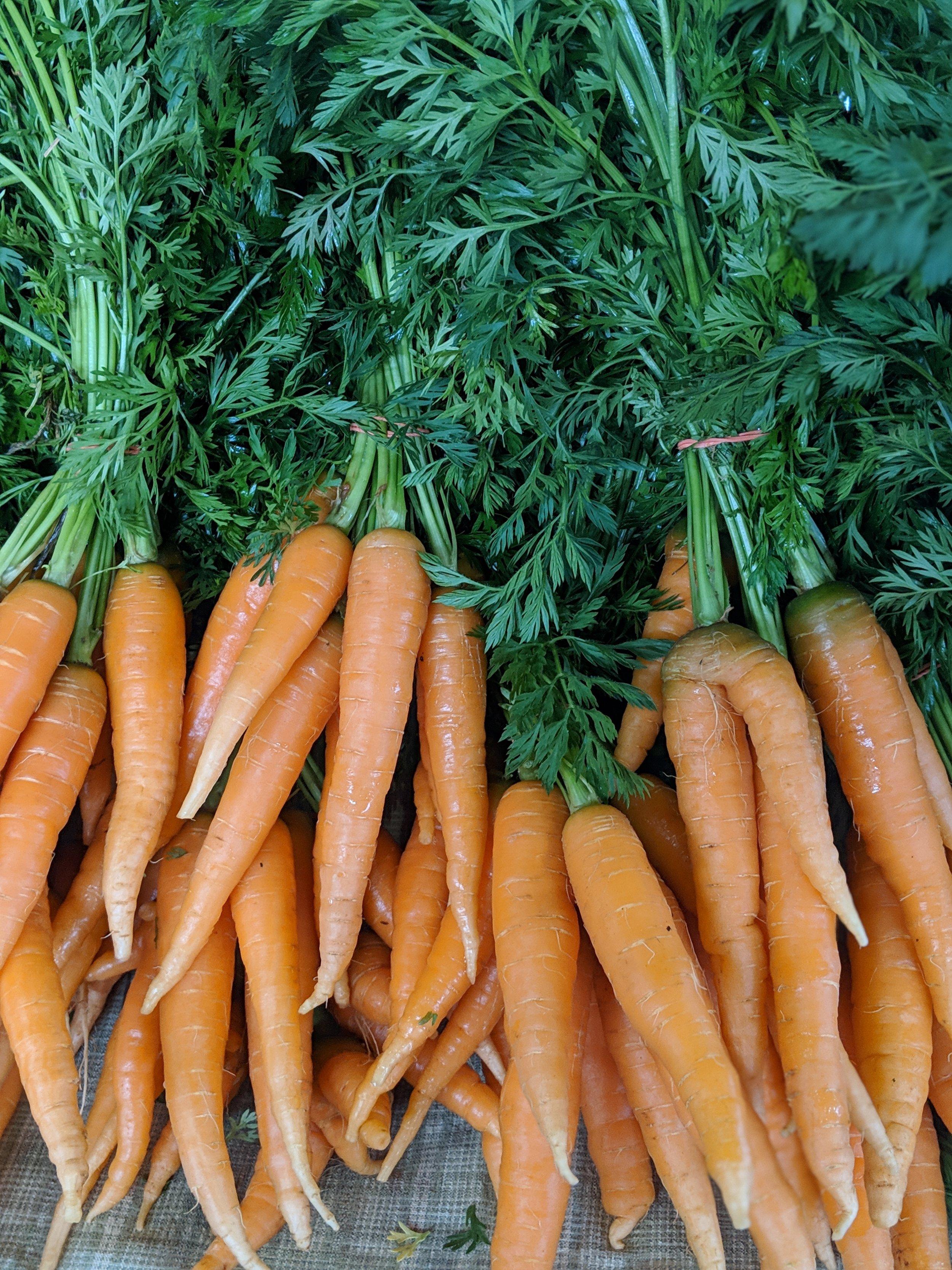 Carrots from Hickory Hill Farm