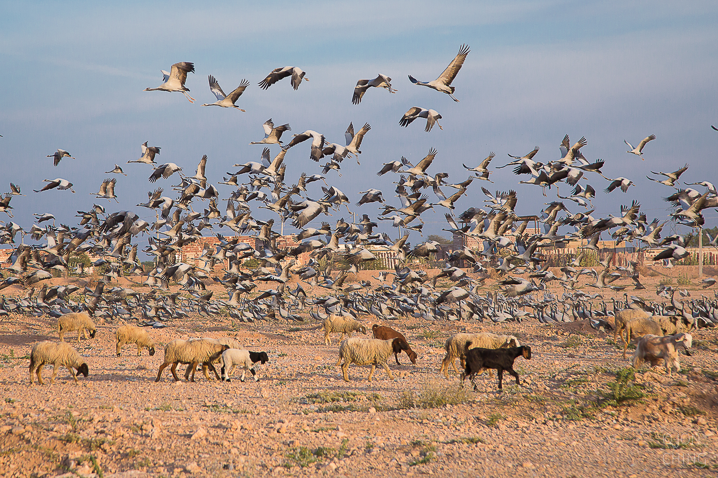 Winter Migration