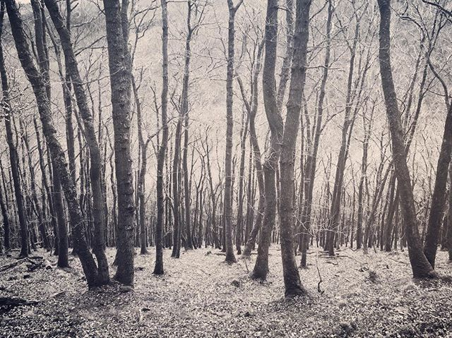 #woodlands #woods #trees #finglewoods #dartmoor