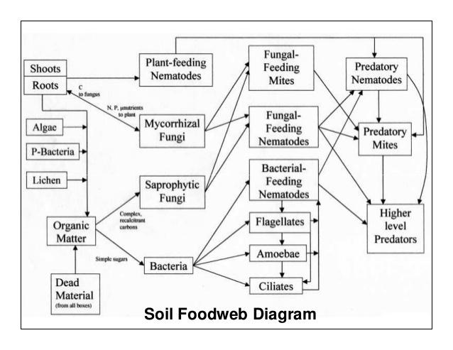 soil foodweb diagram.jpg