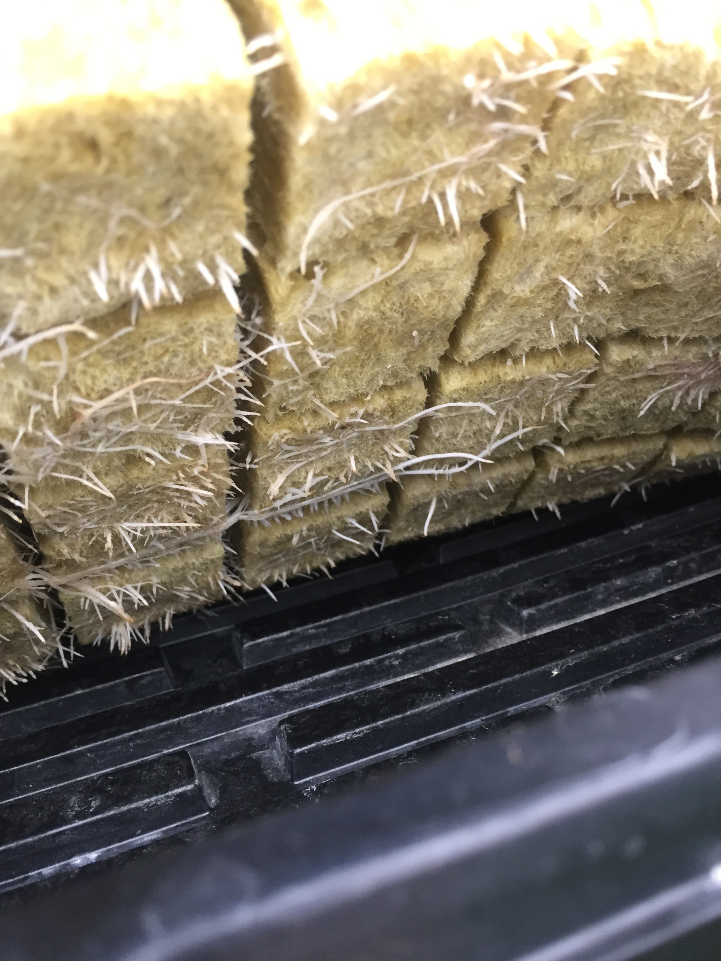 Rookwool cubes with healthy white roots