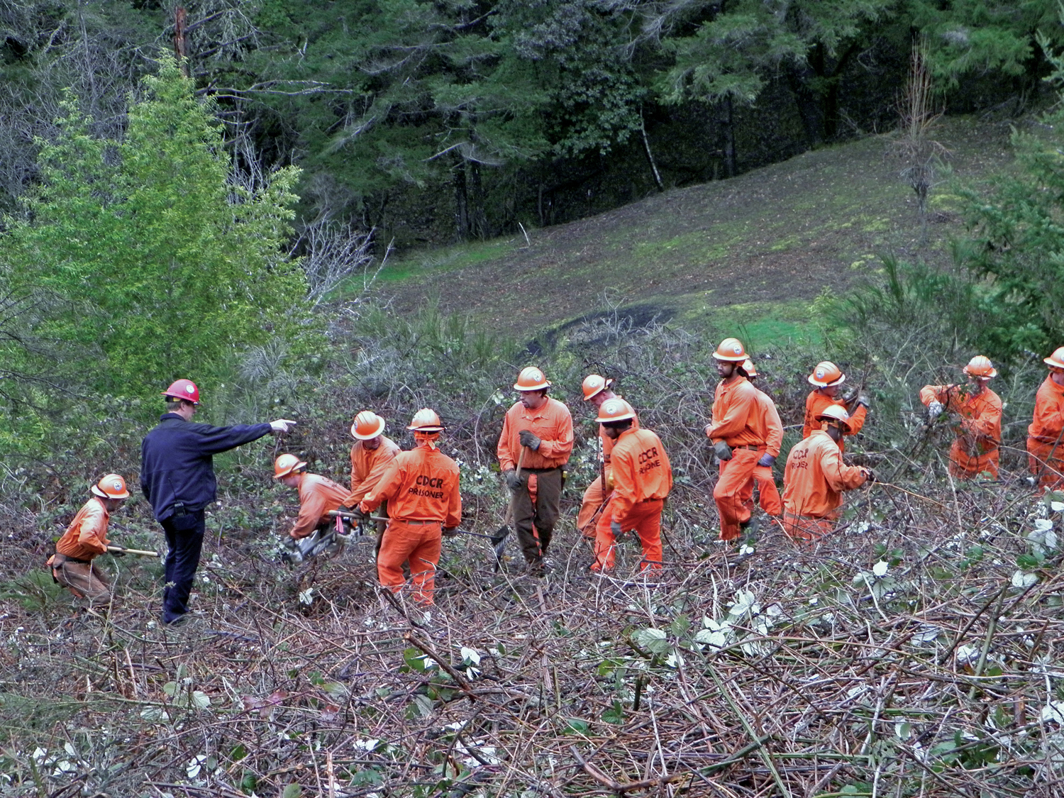 """RIP KIRBY / THE INDEPENDENT   Eel River Conservation Camp workers last week cleared several acres of brush from Bear Canyon. """"People have been camping out there and several fires [have been] started in the area,"""" Second District Supervisor Estelle Fennell said late last year."""