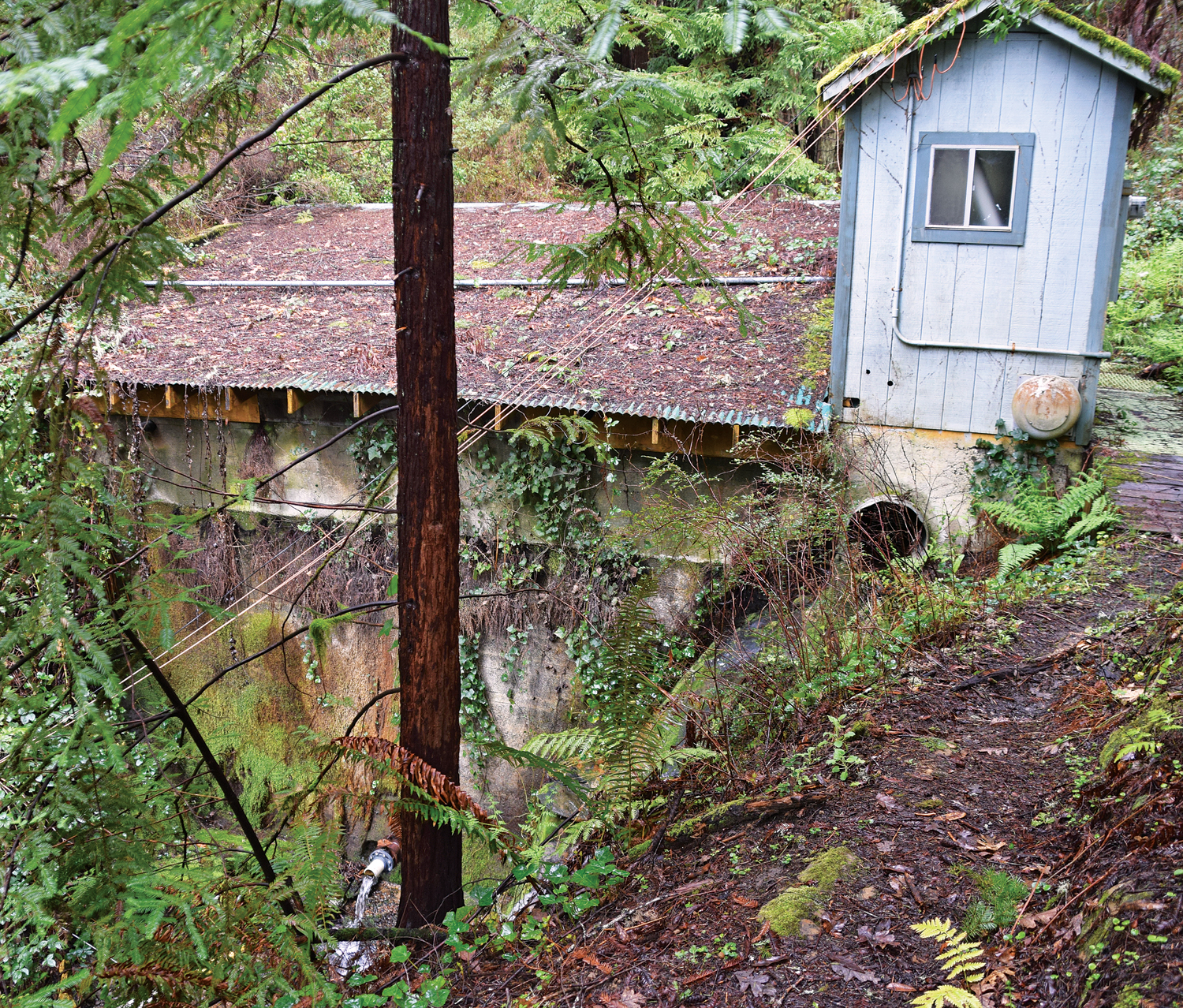 The old infrastructure at the Redway Community Services District's unnamed spring. (Photo by Sandy Feretto)