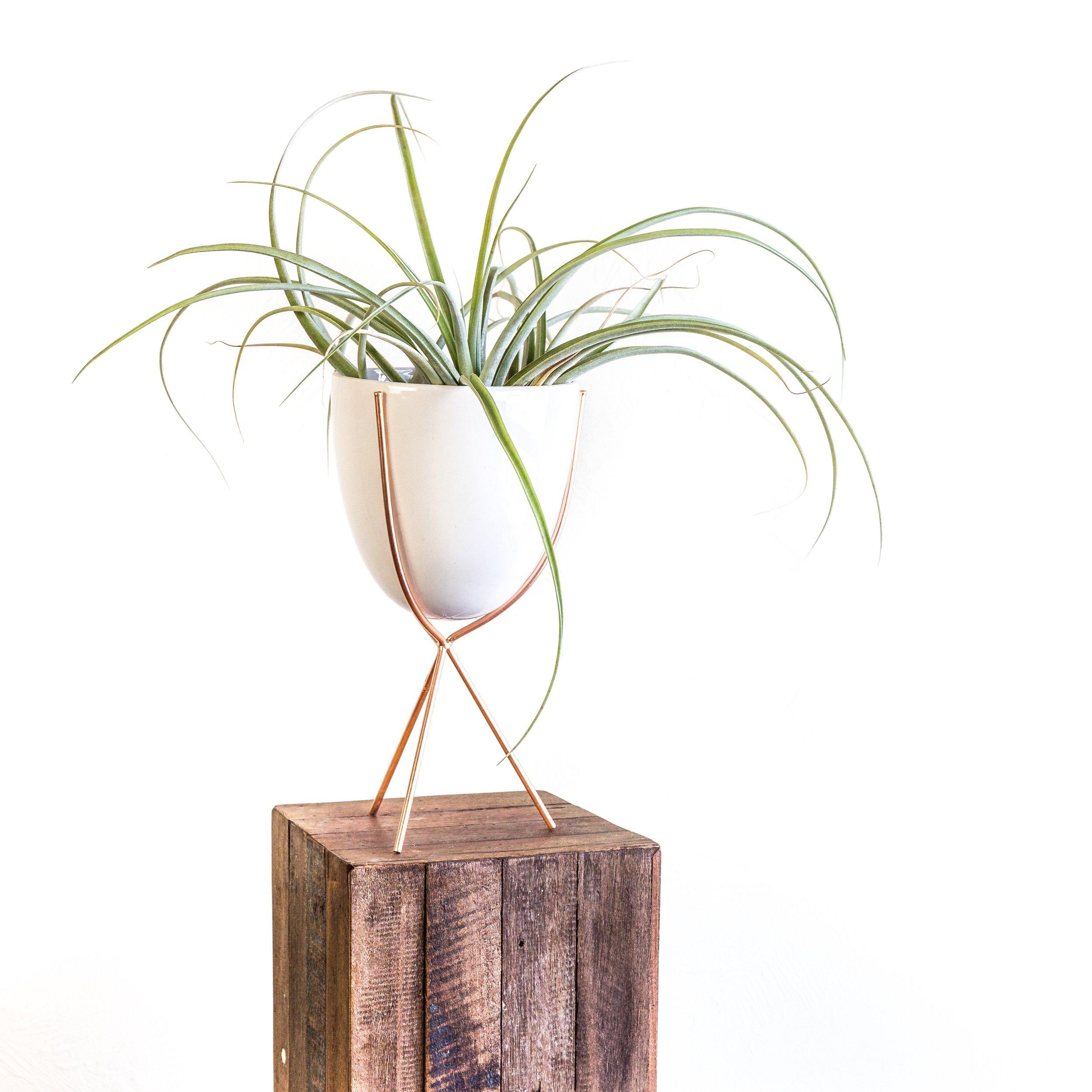 Plant - Airplant 4.jpg