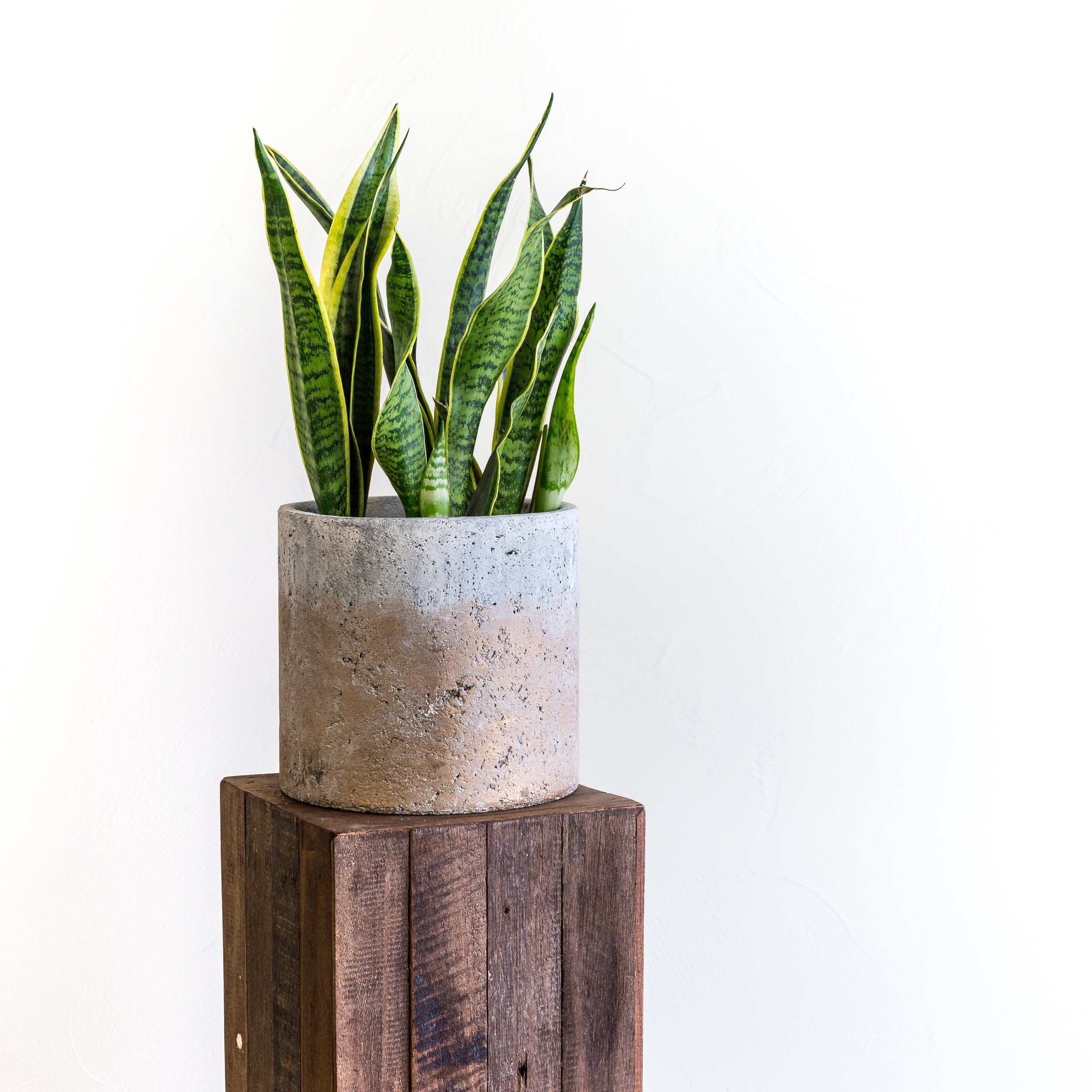 Plant - Green Plant.jpg