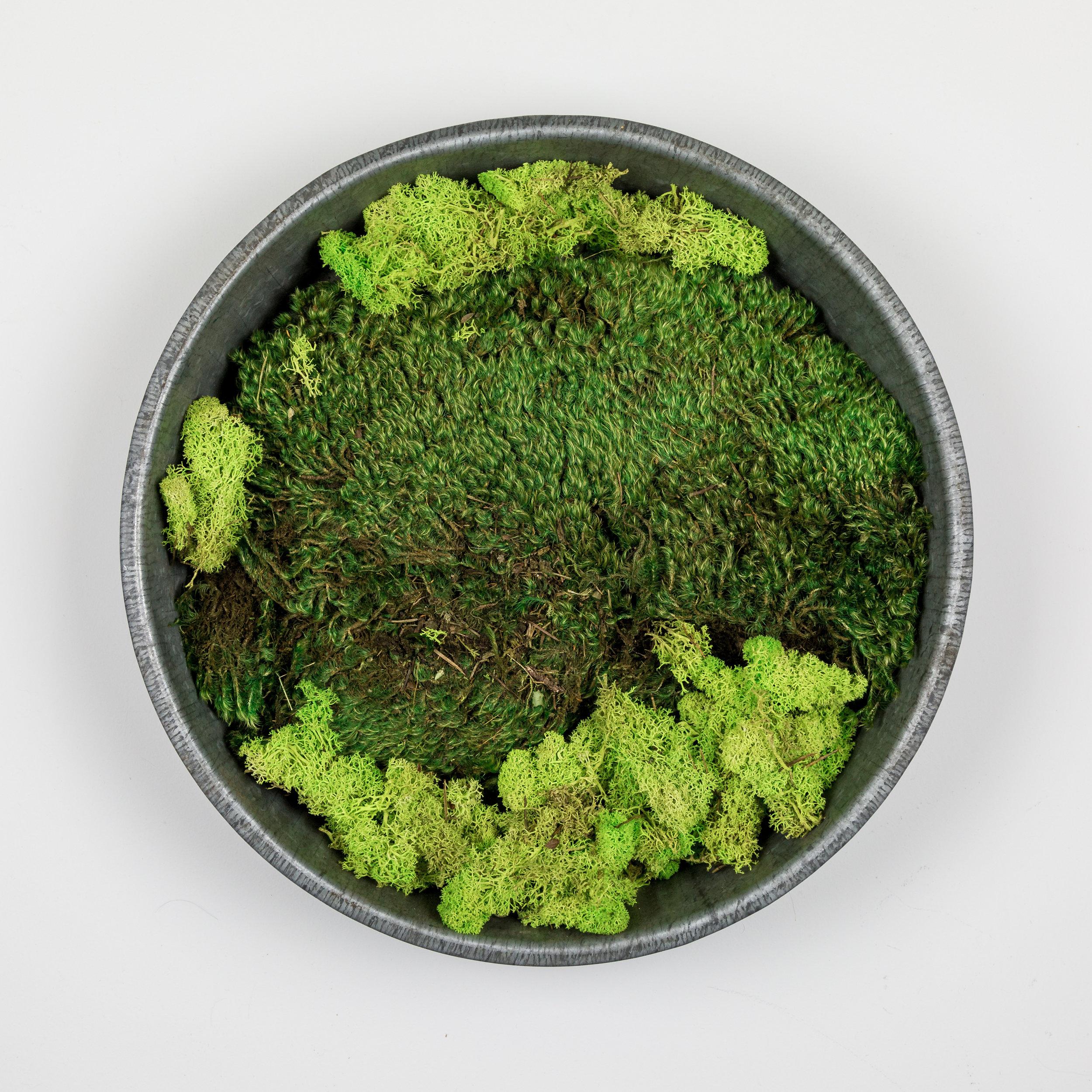 Moss Art.jpg