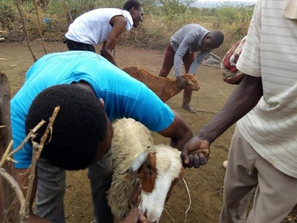 Vet Service During Week of Evangelism - Kenya