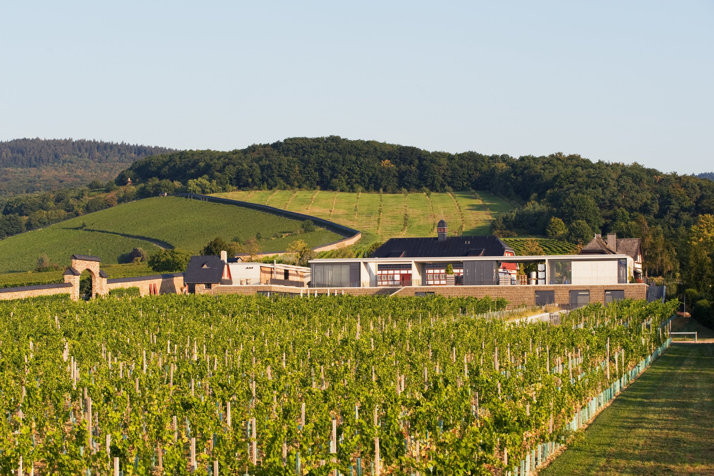 Hattenheimer Steinberg - Surrounded by an approximately 3km long & 4m high wall to prevent the grapes from the infiltration of cold air, the vineyard is exclusively planted with Riesling vines, from which top wines are produced, such as the legendary Steinberger Riesling Trockenbeerenauslese 1921. The domain Steinberg, which belongs to the Hessian state wineries Kloster Eberbach, is 34 hectares large and one of the most prestigious vineyards at the monastery.