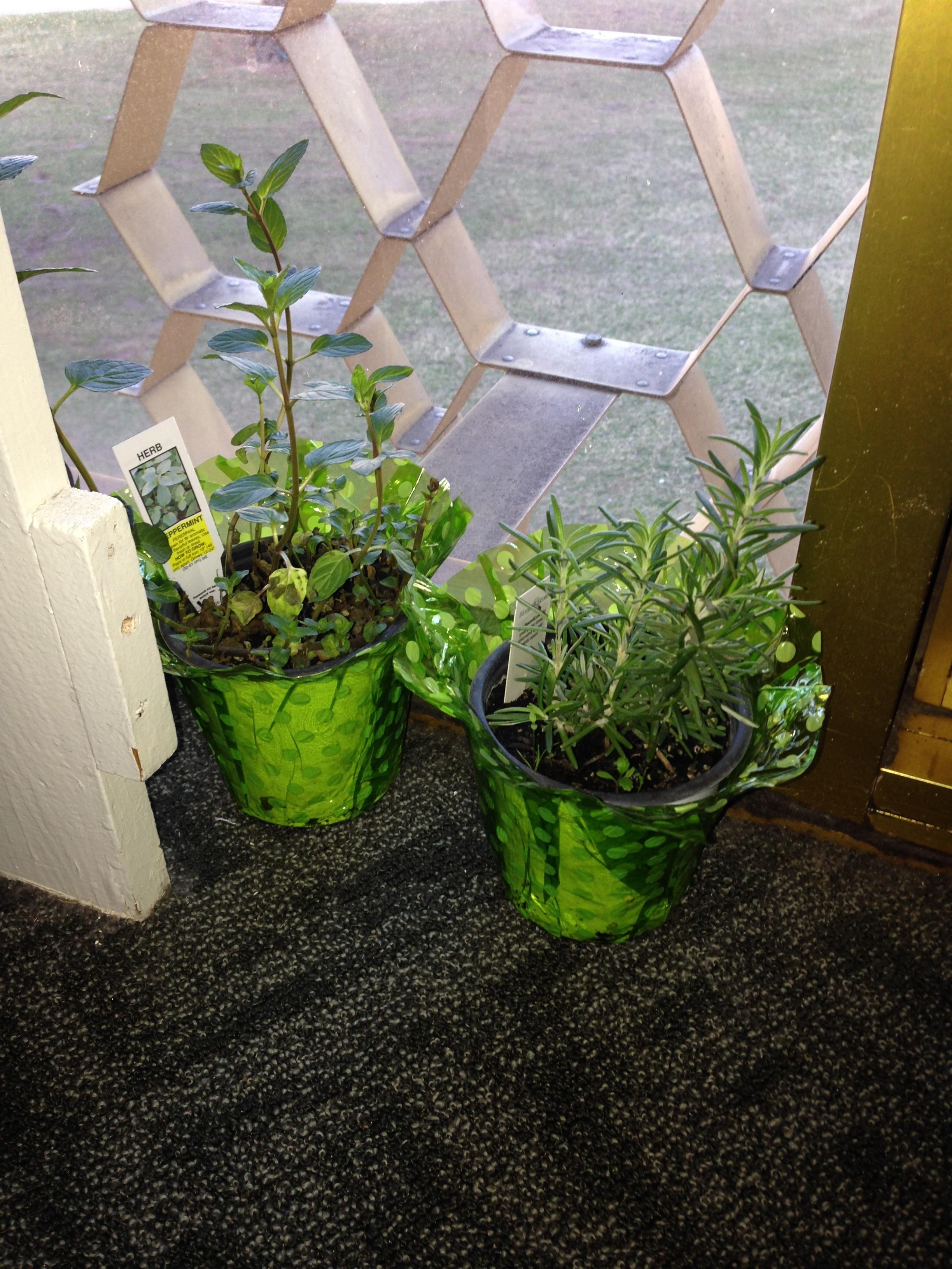 herbs-and-dorm.jpg