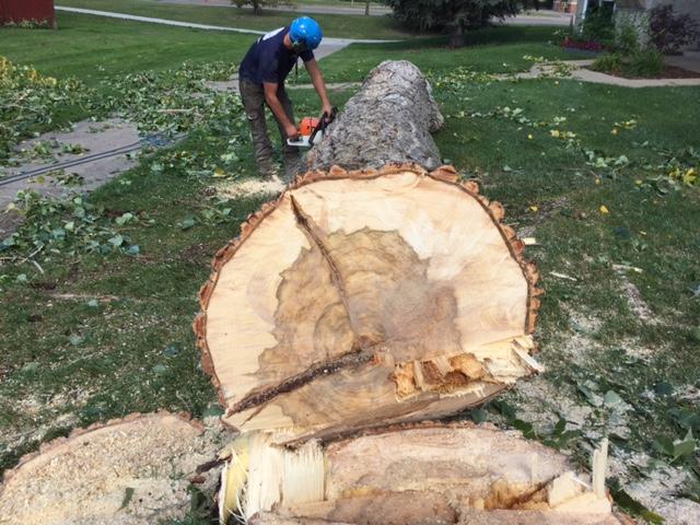Log Salvage - Running Saw.JPG