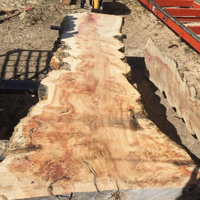 We have started milling up some of our urban salvaged trees this spring. We have another 70 or so to go before the rush of trees this year #urbanlogsalvage #checkoutthegrain #liveedge #savethetrees #yegwoodworking
