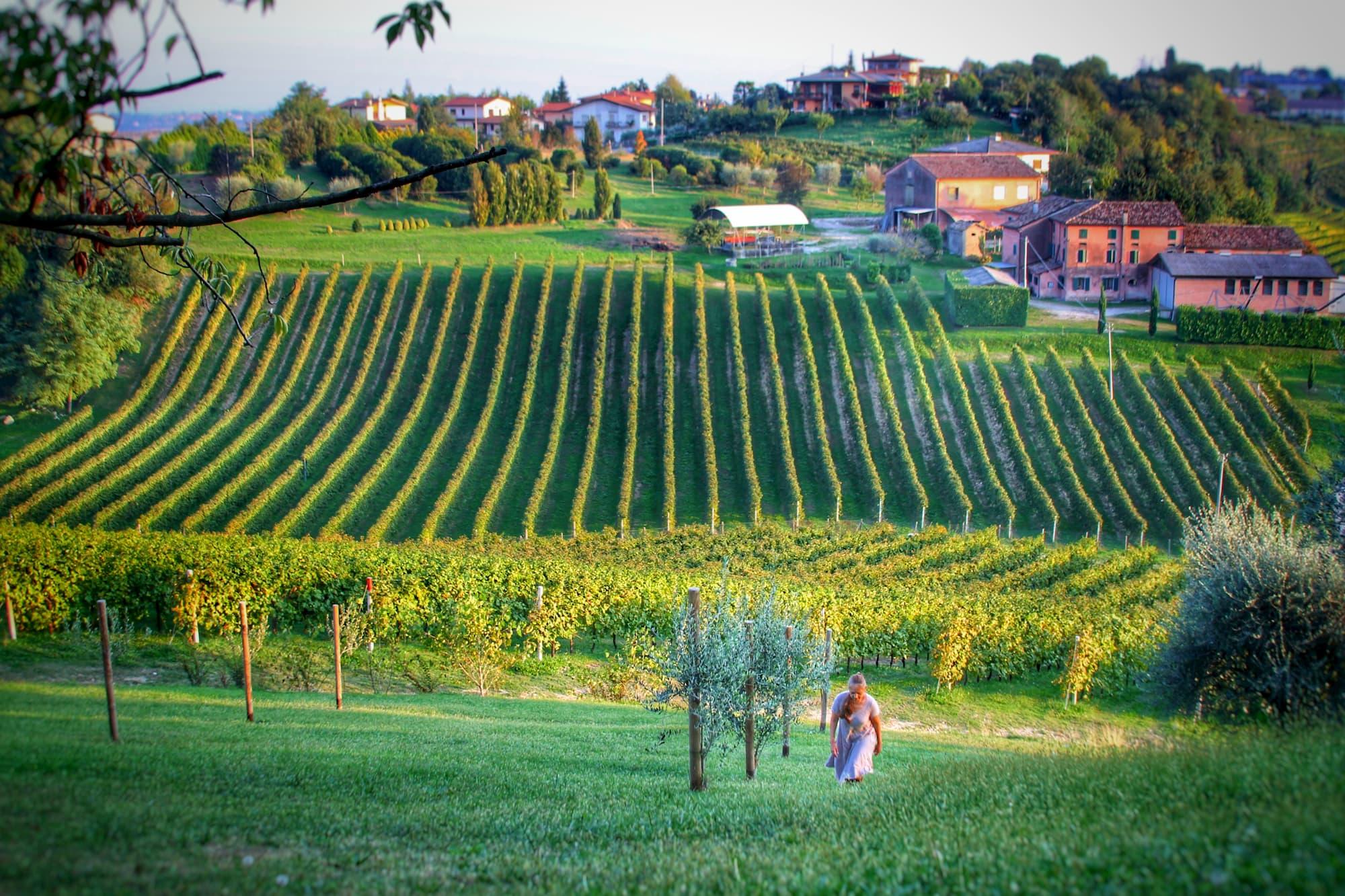 vineyardgastronomad.jpg
