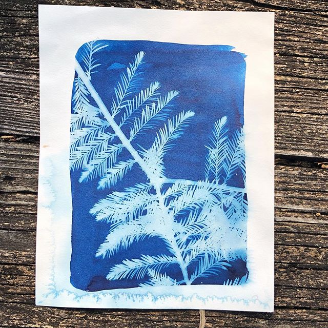 Learn how to prepare and print your own Cyanotypes! 🌿 We'll have a diy darkroom set up at the studio for you to create botanical and silhouette prints. Artist @blue.child will lead us through this process on Sunday the 26th! Tickets are live at hive arts.org