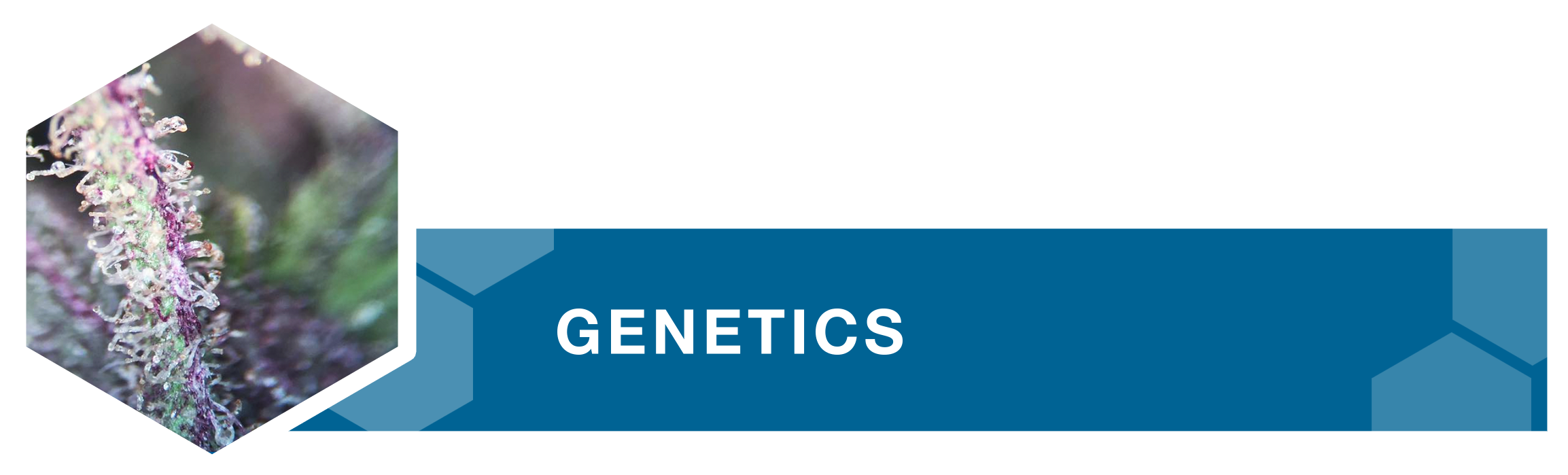 geneticsv4.png